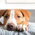 Infestazioni da parassiti intestinali nel cane: i 3 migliori antielmintici per eliminarli