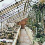 Scegliere le piante grasse: ecco come fare
